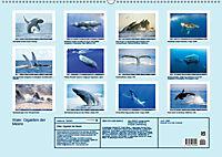 Wale: Giganten der Meere (Wandkalender 2019 DIN A2 quer) - Produktdetailbild 13