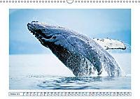 Wale: Giganten der Meere (Wandkalender 2019 DIN A3 quer) - Produktdetailbild 10