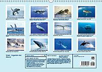 Wale: Giganten der Meere (Wandkalender 2019 DIN A3 quer) - Produktdetailbild 13