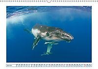 Wale: Giganten der Meere (Wandkalender 2019 DIN A3 quer) - Produktdetailbild 4