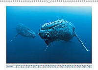 Wale: Giganten der Meere (Wandkalender 2019 DIN A3 quer) - Produktdetailbild 8