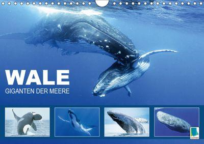 Wale: Giganten der Meere (Wandkalender 2019 DIN A4 quer), CALVENDO