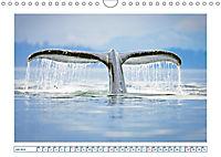 Wale: Giganten der Meere (Wandkalender 2019 DIN A4 quer) - Produktdetailbild 7