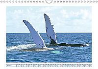 Wale: Giganten der Meere (Wandkalender 2019 DIN A4 quer) - Produktdetailbild 5