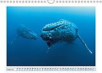 Wale: Giganten der Meere (Wandkalender 2019 DIN A4 quer) - Produktdetailbild 8
