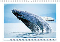 Wale: Giganten der Meere (Wandkalender 2019 DIN A4 quer) - Produktdetailbild 10