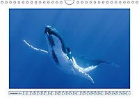 Wale: Giganten der Meere (Wandkalender 2019 DIN A4 quer) - Produktdetailbild 11