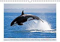Wale: Giganten der Meere (Wandkalender 2019 DIN A4 quer) - Produktdetailbild 12
