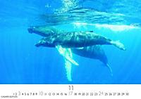 Wale und Delphine 2019 - Produktdetailbild 11