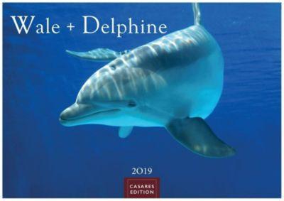 Wale und Delphine 2019