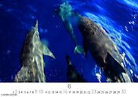 Wale und Delphine 2019 - Produktdetailbild 6
