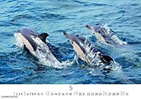 Wale und Delphine 2019 - Produktdetailbild 5