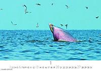 Wale und Delphine 2019 - Produktdetailbild 1