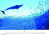 Wale und Delphine 2019 - Produktdetailbild 4