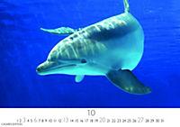 Wale und Delphine 2019 - Produktdetailbild 10