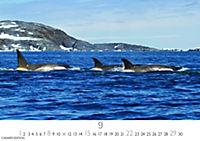 Wale und Delphine 2019 - Produktdetailbild 9