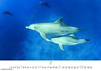 Wale und Delphine 2019 - Produktdetailbild 7