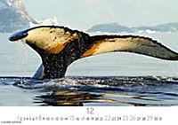 Wale und Delphine 2019 - Produktdetailbild 12