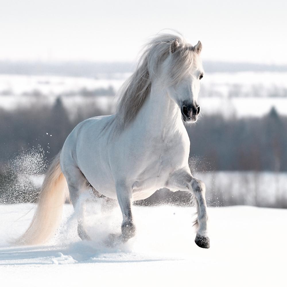 Pferde Weihnachtskalender.Wand Adventskalender Pferd In Schneelandschaft Weltbild De