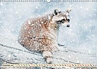Waschbär - Niedlicher Allesfresser (Wandkalender 2019 DIN A3 quer) - Produktdetailbild 12