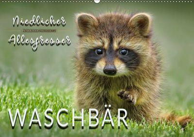 Waschbär - Niedlicher Allesfresser (Wandkalender 2019 DIN A2 quer), Peter Roder