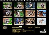 Waschbär - Niedlicher Allesfresser (Wandkalender 2019 DIN A2 quer) - Produktdetailbild 13