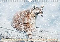 Waschbär - Niedlicher Allesfresser (Wandkalender 2019 DIN A4 quer) - Produktdetailbild 12