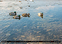 Wasser - Leben-Kraft-Stille-Bewegung (Wandkalender 2019 DIN A3 quer) - Produktdetailbild 1