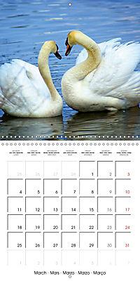Waterfowl Birds and Water (Wall Calendar 2019 300 × 300 mm Square) - Produktdetailbild 3