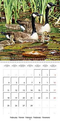 Waterfowl Birds and Water (Wall Calendar 2019 300 × 300 mm Square) - Produktdetailbild 2