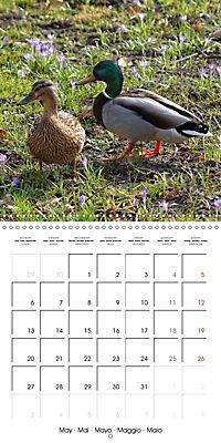 Waterfowl Birds and Water (Wall Calendar 2019 300 × 300 mm Square) - Produktdetailbild 5