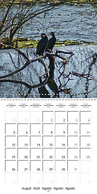Waterfowl Birds and Water (Wall Calendar 2019 300 × 300 mm Square) - Produktdetailbild 8