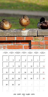 Waterfowl Birds and Water (Wall Calendar 2019 300 × 300 mm Square) - Produktdetailbild 7