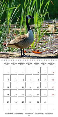 Waterfowl Birds and Water (Wall Calendar 2019 300 × 300 mm Square) - Produktdetailbild 11