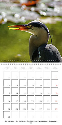 Waterfowl Birds and Water (Wall Calendar 2019 300 × 300 mm Square) - Produktdetailbild 9
