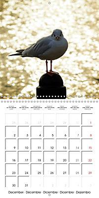 Waterfowl Birds and Water (Wall Calendar 2019 300 × 300 mm Square) - Produktdetailbild 12