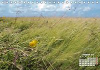 Watt'n Licht, viel Wind, wenig Meer (Tischkalender 2019 DIN A5 quer) - Produktdetailbild 8