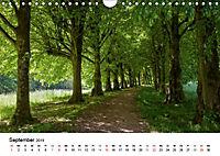 Wege durchs neue Jahr (Wandkalender 2019 DIN A4 quer) - Produktdetailbild 9
