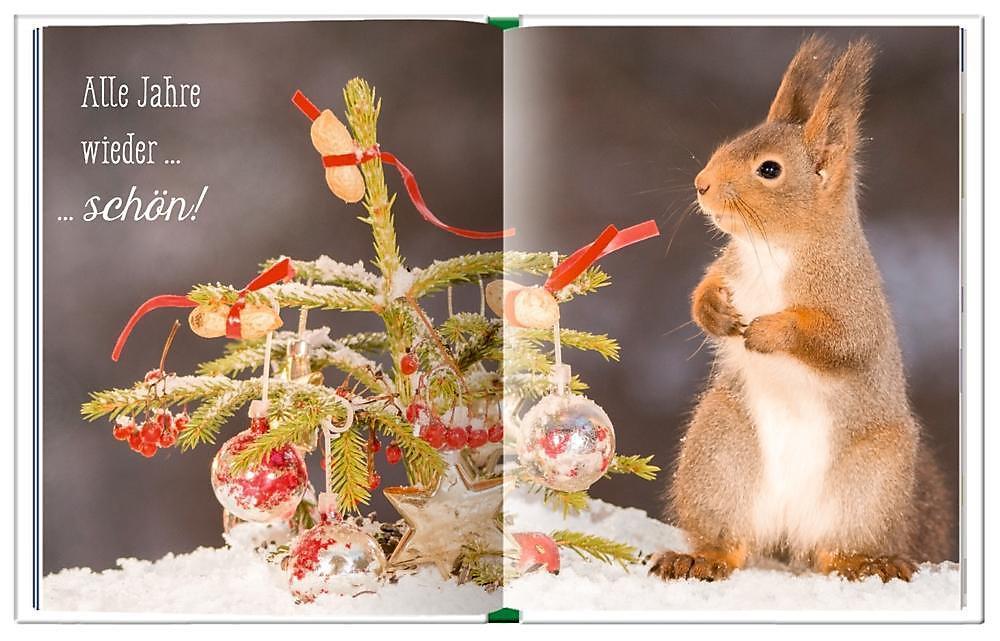 Weihnachten bei den Eichhörnchen Buch portofrei bei Weltbild.de