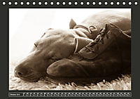 Weimaraner - Ein Welpenjahr (Tischkalender 2019 DIN A5 quer) - Produktdetailbild 10