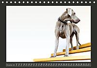 Weimaraner - Ein Welpenjahr (Tischkalender 2019 DIN A5 quer) - Produktdetailbild 11