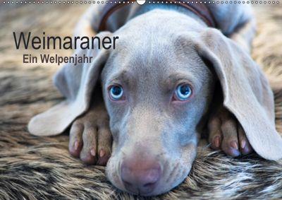 Weimaraner - Ein Welpenjahr (Wandkalender 2019 DIN A2 quer), Ira Kaltenegger