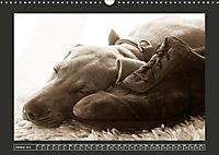 Weimaraner - Ein Welpenjahr (Wandkalender 2019 DIN A3 quer) - Produktdetailbild 4