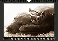 Weimaraner - Ein Welpenjahr (Wandkalender 2019 DIN A4 quer) - Produktdetailbild 10