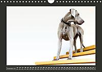 Weimaraner - Ein Welpenjahr (Wandkalender 2019 DIN A4 quer) - Produktdetailbild 11