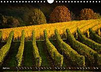 Wein - Landschaften (Wandkalender 2019 DIN A4 quer) - Produktdetailbild 4