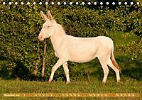 Weiße Esel - Märchenhafte Langohren (Tischkalender 2019 DIN A5 quer) - Produktdetailbild 11