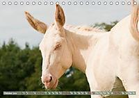 Weiße Esel - Märchenhafte Langohren (Tischkalender 2019 DIN A5 quer) - Produktdetailbild 10