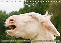 Weiße Esel - Märchenhafte Langohren (Tischkalender 2019 DIN A5 quer) - Produktdetailbild 1