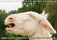 Weisse Esel - Märchenhafte Langohren (Tischkalender 2019 DIN A5 quer) - Produktdetailbild 1